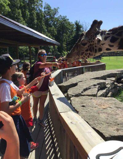 Kids feeding a giraffe a carrot