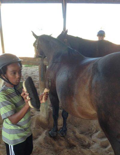 Boy brushing a horse