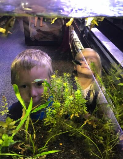 Children looking at fish