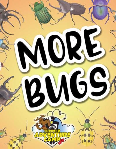 SAC Jr Weekly Theme: More Bugs